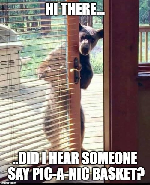 Bear Season | HI THERE... ..DID I HEAR SOMEONE SAY PIC-A-NIC BASKET? | image tagged in bears,bear,bear season | made w/ Imgflip meme maker