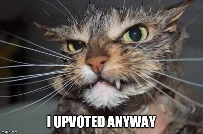 Angry Mad Cat | I UPVOTED ANYWAY | image tagged in angry mad cat | made w/ Imgflip meme maker