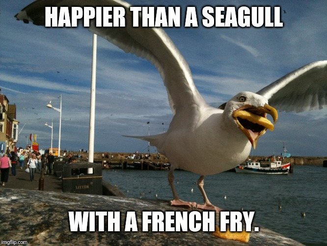 Seagull | HAPPIER THAN A SEAGULL WITH A FRENCH FRY. | image tagged in seagull,french fry | made w/ Imgflip meme maker
