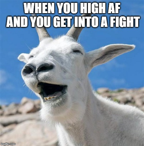 Laughing Goat | WHEN YOU HIGH AF AND YOU GET INTO A FIGHT | image tagged in memes,laughing goat | made w/ Imgflip meme maker