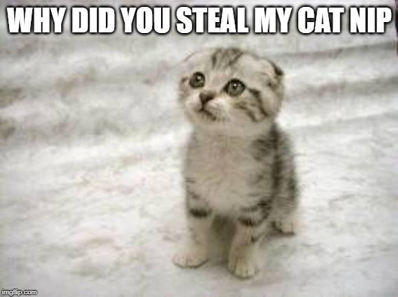 Sad Cat |  WHY DID YOU STEAL MY CAT NIP | image tagged in memes,sad cat | made w/ Imgflip meme maker
