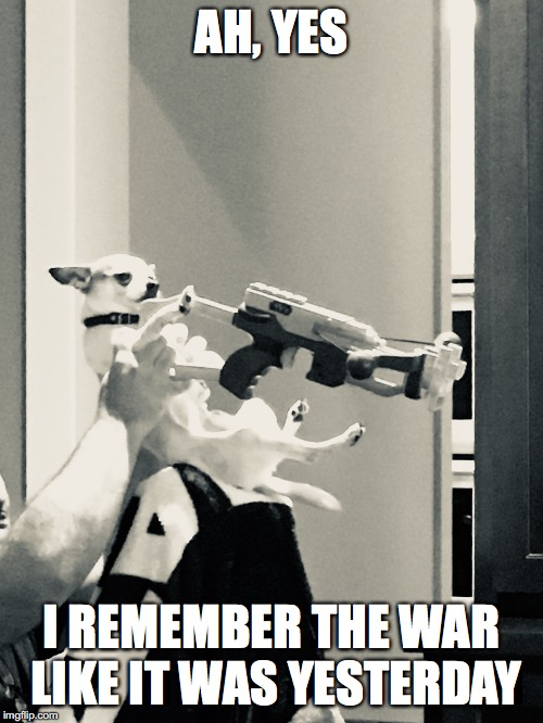 AH, YES I REMEMBER THE WAR LIKE IT WAS YESTERDAY | image tagged in dog,war,funny | made w/ Imgflip meme maker