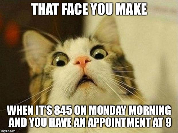 Scared Cat Meme | THAT FACE YOU MAKE WHEN IT'S 845 ON MONDAY MORNING AND YOU HAVE AN APPOINTMENT AT 9 | image tagged in memes,scared cat | made w/ Imgflip meme maker