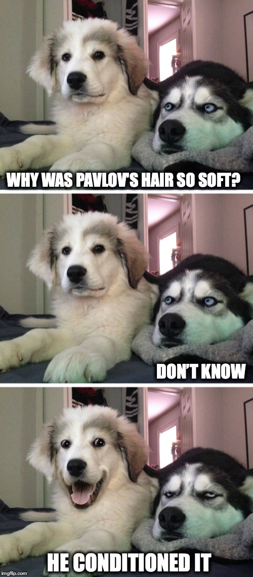 Bad pun dogs | WHY WAS PAVLOV'S HAIR SO SOFT? HE CONDITIONED IT DON'T KNOW | image tagged in bad pun dogs,hair | made w/ Imgflip meme maker