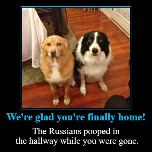 We're glad you're finally home! | We're glad you're finally home! | The Russians pooped in the hallway while you were gone. | image tagged in funny,demotivationals,the russians did it,russians,damned russians,dog poop | made w/ Imgflip demotivational maker