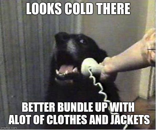 Yes this is dog | LOOKS COLD THERE BETTER BUNDLE UP WITH ALOT OF CLOTHES AND JACKETS | image tagged in yes this is dog | made w/ Imgflip meme maker
