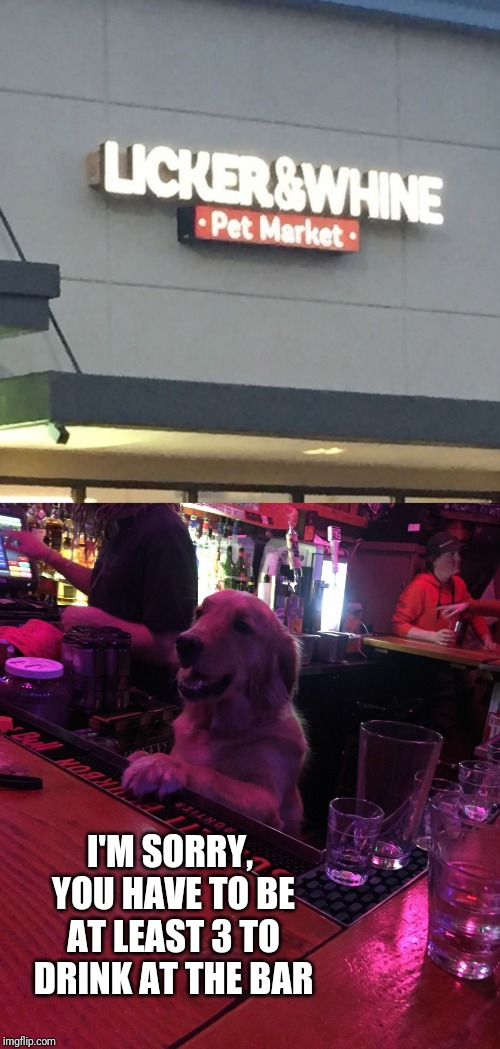 In dog years, everything takes so long | I'M SORRY, YOU HAVE TO BE AT LEAST 3 TO DRINK AT THE BAR | image tagged in memes,bartender,alcoholism,up all night,dog problems,now that's something i haven't seen in a long time | made w/ Imgflip meme maker