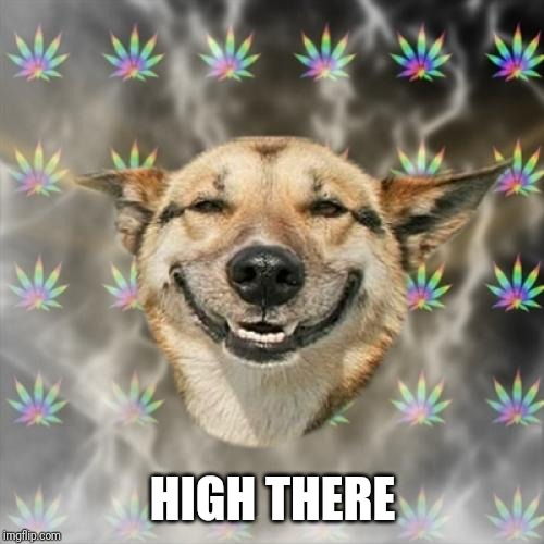Stoner Dog Meme | HIGH THERE | image tagged in memes,stoner dog | made w/ Imgflip meme maker