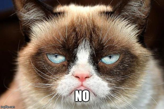 Grumpy Cat Not Amused Meme | NO | image tagged in memes,grumpy cat not amused,grumpy cat | made w/ Imgflip meme maker