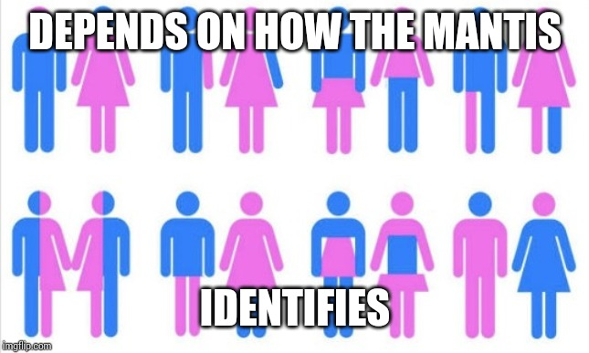Gender chart 58 genders | DEPENDS ON HOW THE MANTIS IDENTIFIES | image tagged in gender chart 58 genders | made w/ Imgflip meme maker