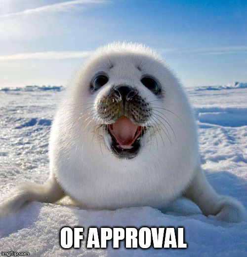 cute seal | OF APPROVAL | image tagged in cute seal | made w/ Imgflip meme maker