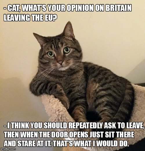 Thinking cat | image tagged in brexit,cat | made w/ Imgflip meme maker
