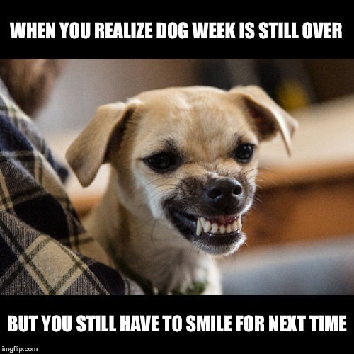 Please bring dog week back | WHEN YOU REALIZE DOG WEEK IS STILL OVER BUT YOU STILL HAVE TO SMILE FOR NEXT TIME | image tagged in dogs,dog week | made w/ Imgflip meme maker