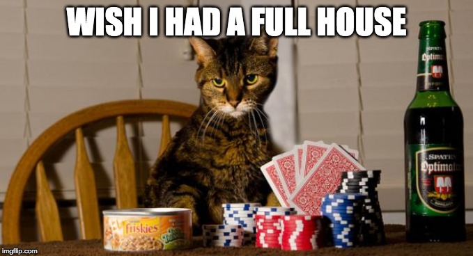 Poker Cat | WISH I HAD A FULL HOUSE | image tagged in poker cat | made w/ Imgflip meme maker