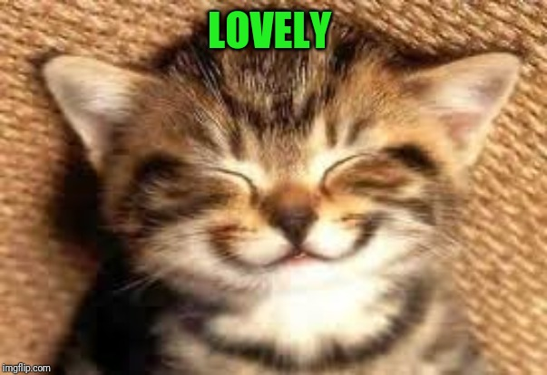 Happy cat | LOVELY | image tagged in happy cat | made w/ Imgflip meme maker
