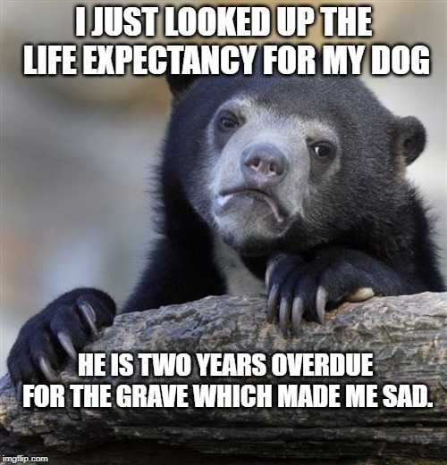 Confession Bear | I JUST LOOKED UP THE LIFE EXPECTANCY FOR MY DOG HE IS TWO YEARS OVERDUE FOR THE GRAVE WHICH MADE ME SAD. | image tagged in memes,confession bear | made w/ Imgflip meme maker