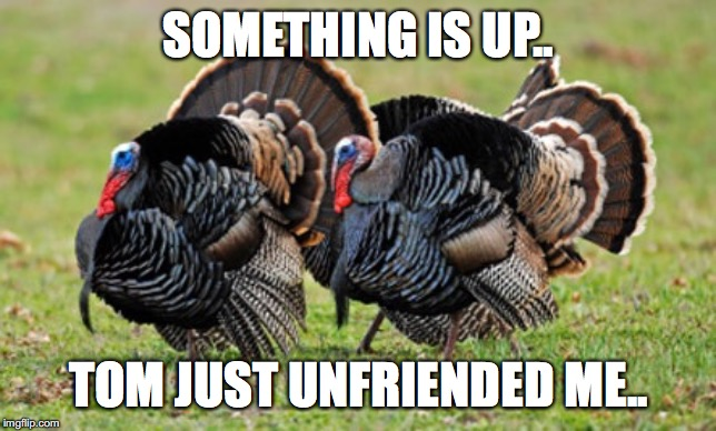 Turkey | SOMETHING IS UP.. TOM JUST UNFRIENDED ME.. | image tagged in turkey | made w/ Imgflip meme maker