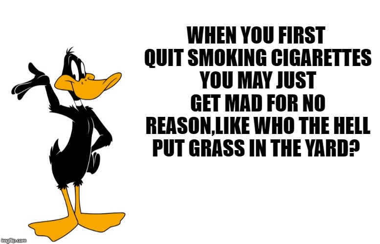 quitting is tough | WHEN YOU FIRST QUIT SMOKING CIGARETTES YOU MAY JUST GET MAD FOR NO REASON,LIKE WHO THE HELL PUT GRASS IN THE YARD? | image tagged in daffy speaking,funny | made w/ Imgflip meme maker