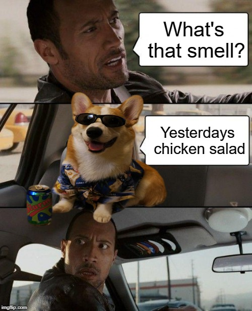 The Rock Driving Meme | What's that smell? Yesterdays chicken salad | image tagged in memes,the rock driving | made w/ Imgflip meme maker