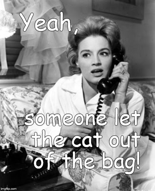Ever try to get a cat BACK INTO a bag it got out of?  That is why this expression has lasted for so long in regard to secrets. | Yeah, someone let    the cat out     of the bag! | image tagged in angie dickinson,cats,bags,not to be confused with old bags,or hep cats daddio,douglie | made w/ Imgflip meme maker