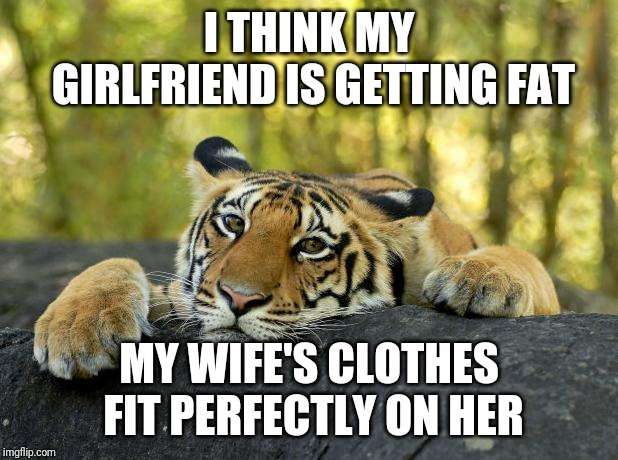 >.< | I THINK MY GIRLFRIEND IS GETTING FAT MY WIFE'S CLOTHES FIT PERFECTLY ON HER | image tagged in confession tiger,terrible tiger,memes,funny memes | made w/ Imgflip meme maker