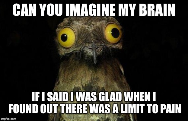 Weird Stuff I Do Potoo | CAN YOU IMAGINE MY BRAIN IF I SAID I WAS GLAD WHEN I FOUND OUT THERE WAS A LIMIT TO PAIN | image tagged in memes,weird stuff i do potoo | made w/ Imgflip meme maker