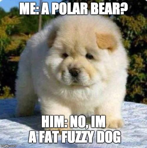 ME: A POLAR BEAR? HIM: NO, IM A FAT FUZZY DOG | image tagged in fat fuzzy | made w/ Imgflip meme maker