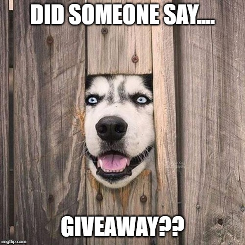 Cute Dog | DID SOMEONE SAY.... GIVEAWAY?? | image tagged in dog,dogs,giveaway | made w/ Imgflip meme maker