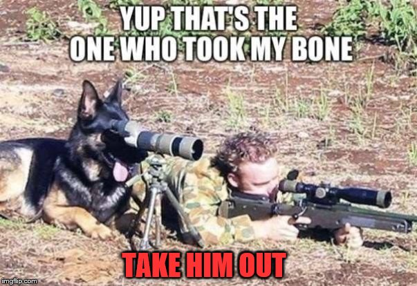 Dog takes revenge seriously | TAKE HIM OUT | image tagged in dog,sniper,revenge | made w/ Imgflip meme maker