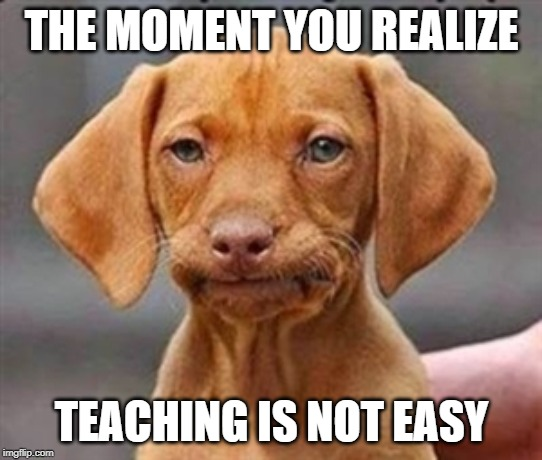 Frustrated dog |  THE MOMENT YOU REALIZE; TEACHING IS NOT EASY | image tagged in frustrated dog | made w/ Imgflip meme maker