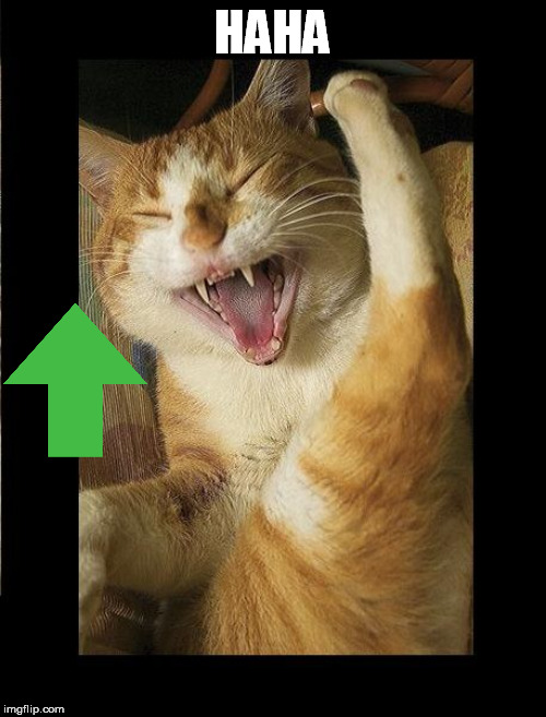 Laughing Cat | HAHA | image tagged in laughing cat | made w/ Imgflip meme maker