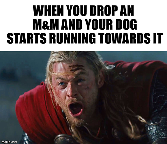 WHEN YOU DROP AN M&M AND YOUR DOG STARTS RUNNING TOWARDS IT | image tagged in dog,chocolate,mm | made w/ Imgflip meme maker