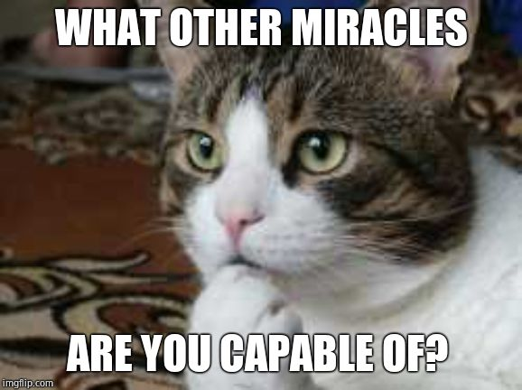 Ponder cat | WHAT OTHER MIRACLES ARE YOU CAPABLE OF? | image tagged in ponder cat | made w/ Imgflip meme maker