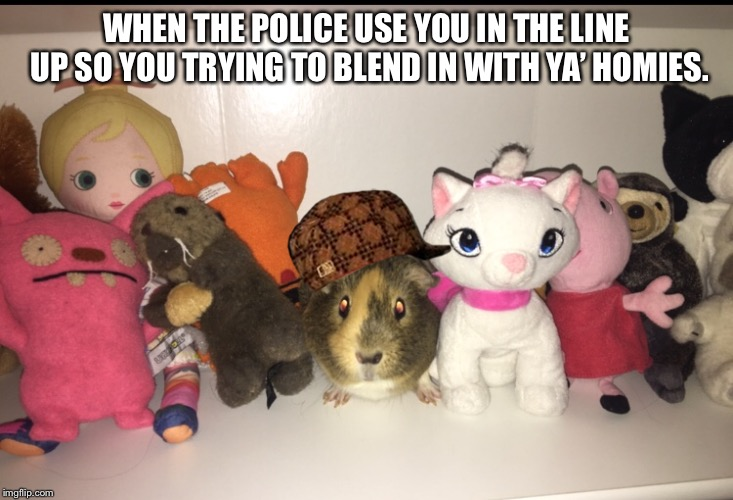 Guinea pig | WHEN THE POLICE USE YOU IN THE LINE UP SO YOU TRYING TO BLEND IN WITH YA' HOMIES. | image tagged in guinea pig | made w/ Imgflip meme maker