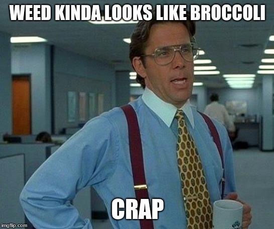 That Would Be Great Meme | WEED KINDA LOOKS LIKE BROCCOLI CRAP | image tagged in memes,that would be great | made w/ Imgflip meme maker
