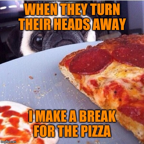 pizza dog | WHEN THEY TURN THEIR HEADS AWAY I MAKE A BREAK FOR THE PIZZA | image tagged in pizza dog | made w/ Imgflip meme maker