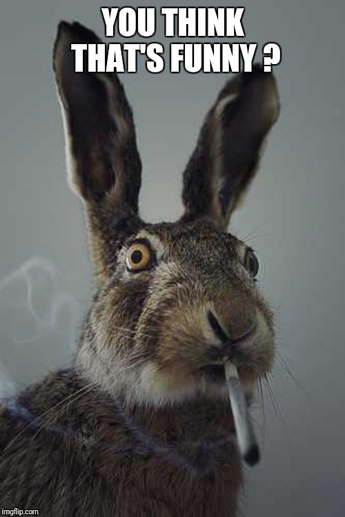 Rabbit smoking  | YOU THINK THAT'S FUNNY ? | image tagged in rabbit smoking | made w/ Imgflip meme maker