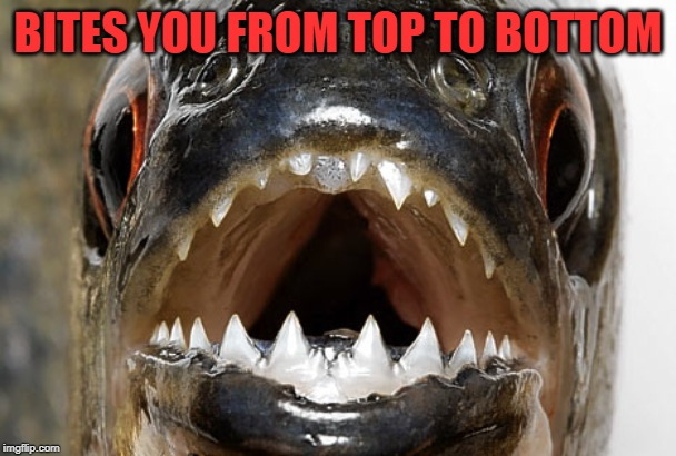 Bad joke piranha | BITES YOU FROM TOP TO BOTTOM | image tagged in bad joke piranha | made w/ Imgflip meme maker