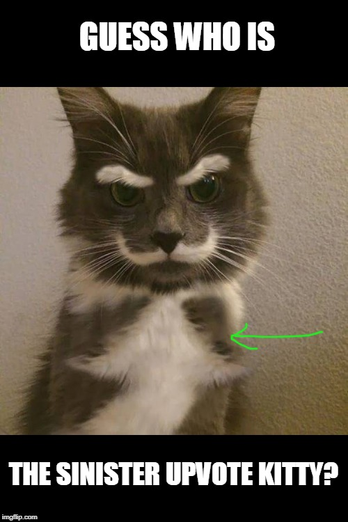 arrow on chest | GUESS WHO IS THE SINISTER UPVOTE KITTY? | image tagged in cats,funny | made w/ Imgflip meme maker
