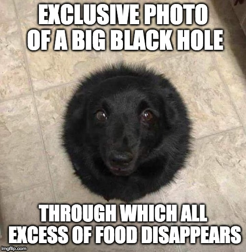 Black Hole | EXCLUSIVE PHOTO OF A BIG BLACK HOLE THROUGH WHICH ALL EXCESS OF FOOD DISAPPEARS | image tagged in funny,funny dogs | made w/ Imgflip meme maker
