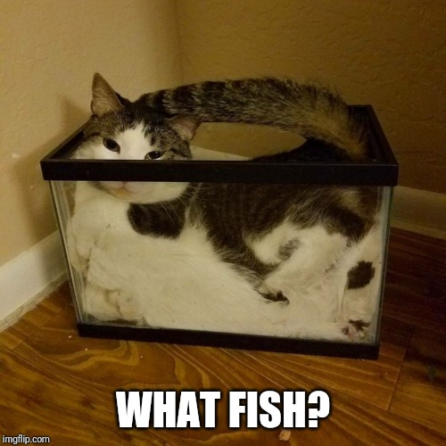 Guilty as Wile E. Coyote | WHAT FISH? | image tagged in cat in aquarium | made w/ Imgflip meme maker