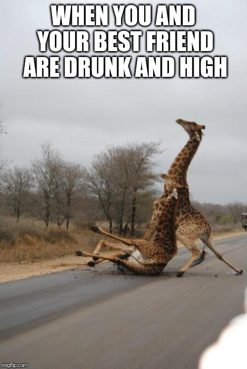 Falling Giraffe | WHEN YOU AND YOUR BEST FRIEND ARE DRUNK AND HIGH | image tagged in falling giraffe | made w/ Imgflip meme maker
