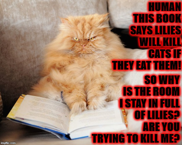 HUMAN THIS BOOK SAYS LILIES WILL KILL CATS IF THEY EAT THEM! SO WHY IS THE ROOM I STAY IN FULL OF LILIES? ARE YOU TRYING TO KILL ME? | image tagged in you tryin to kill me | made w/ Imgflip meme maker