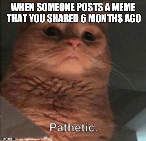 WHEN SOMEONE POSTS A MEME THAT YOU SHARED 6 MONTHS AGO | image tagged in pathetic cat | made w/ Imgflip meme maker