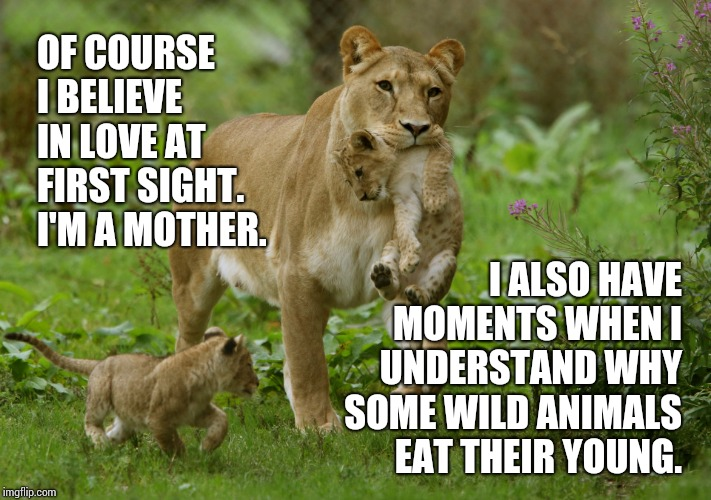 Little Buggers |  OF COURSE I BELIEVE IN LOVE AT FIRST SIGHT.  I'M A MOTHER. I ALSO HAVE MOMENTS WHEN I UNDERSTAND WHY SOME WILD ANIMALS EAT THEIR YOUNG. | image tagged in lioness carrying cub,parenting,exhausted,kids these days,funny kids,memes | made w/ Imgflip meme maker