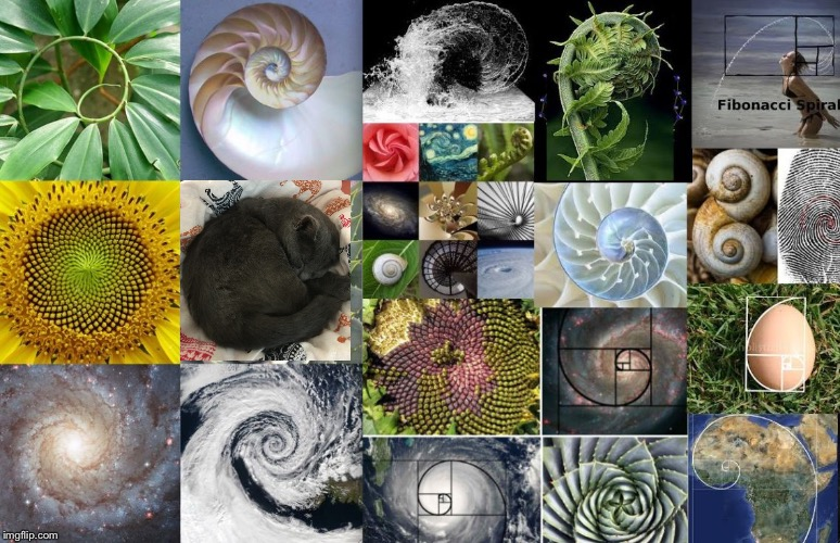 Golden Ratio Spirals | image tagged in golden ratio spirals | made w/ Imgflip meme maker