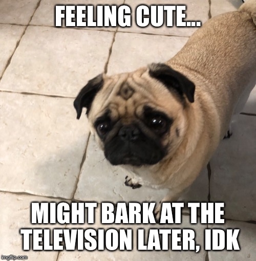 Pug | FEELING CUTE... MIGHT BARK AT THE TELEVISION LATER, IDK | image tagged in pug,dog,barking,ugly,men in black | made w/ Imgflip meme maker