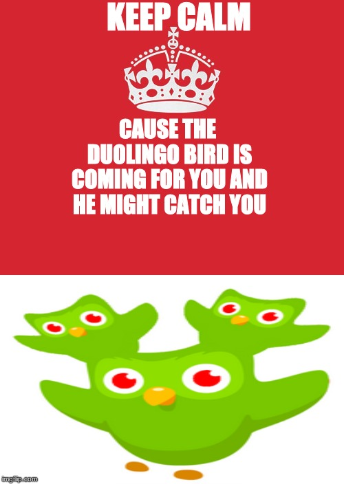 duolingo is cursed |  KEEP CALM; CAUSE THE DUOLINGO BIRD IS COMING FOR YOU AND HE MIGHT CATCH YOU | image tagged in memes,keep calm and carry on red,duolingo,evil duolingo,keep calm,murder | made w/ Imgflip meme maker