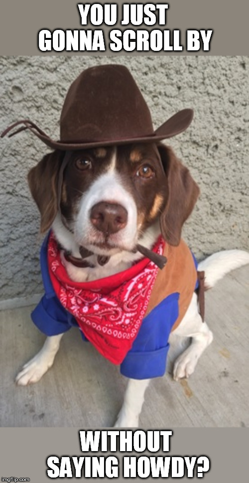 Howdy partner | YOU JUST GONNA SCROLL BY WITHOUT SAYING HOWDY? | image tagged in doggo,howdy,cowboy hat | made w/ Imgflip meme maker