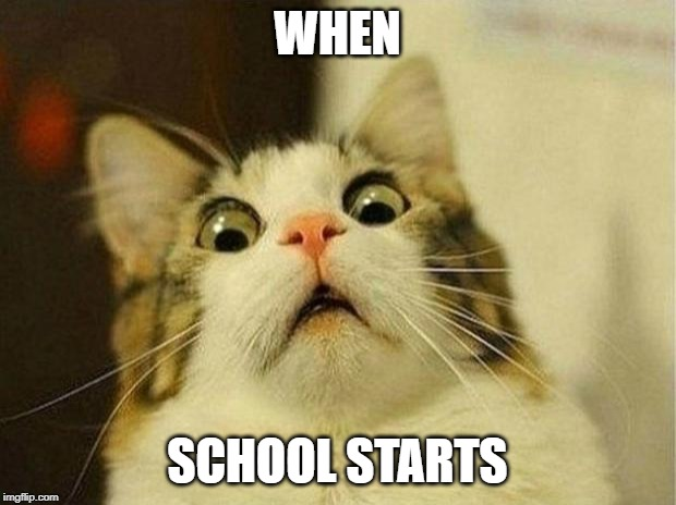 Scared Cat Meme | WHEN SCHOOL STARTS | image tagged in memes,scared cat | made w/ Imgflip meme maker